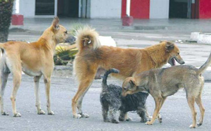 Programan jornada de esterilizaci n de perros y gatos en - Novedades para mascotas ...