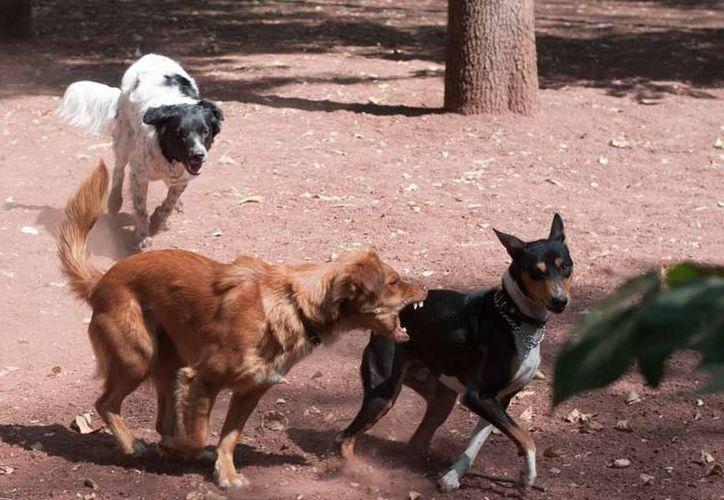 Del 16 de diciembre del 2012 hasta hoy se han registrado cinco casos de personas muertas en Iztapalapa por mordeduras de perros. (Foto de contexto/Notimex)