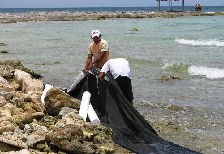 Autoridades de los tres niveles de gobierno no hacen nada para evitar la contaminación. (Rossy López/SIPSE)
