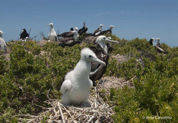 El Arrecife Alacranes cuenta con una gran cantidad de fauna que hace que esta zona sea especial en cuanto a su ecosistema.(Cortesía)