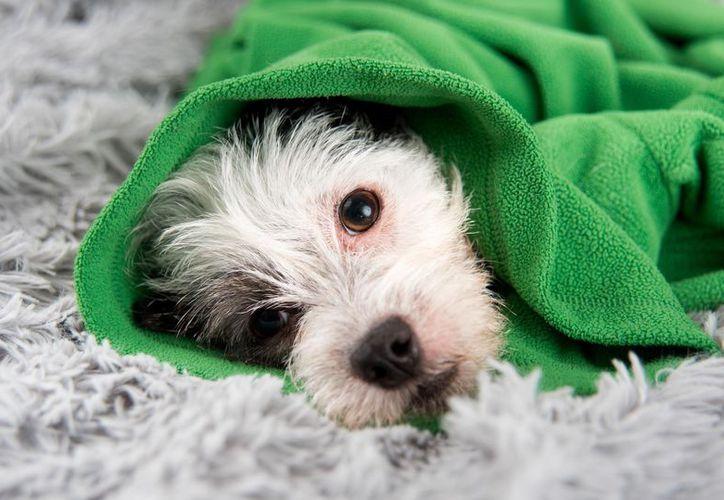 El humo del tabaco, puede provocarle a los perros, náuseas y pérdida de apetito. Foto: Retorn