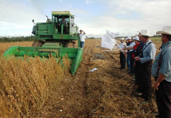 Los próximos 30 años se requerirá duplicar la producción actual de alimentos. (Edgardo Rodríguez/SIPSE)