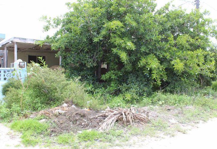 El descuido del ayuntamiento progreseño ha provocado el crecimiento de la maleza y la proliferación del mosco. (Milenio Novedades)