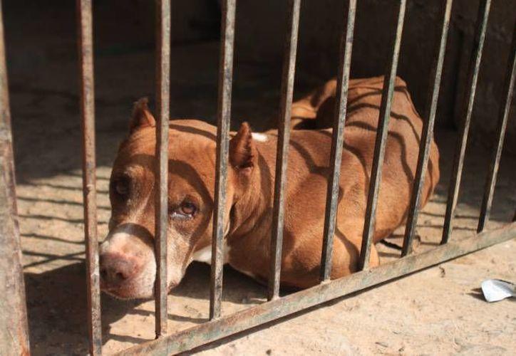 Las personas que desean recuperar su mascota pueden pegar la fotografía del perro en la dependencia. (Archivo/SIPSE)