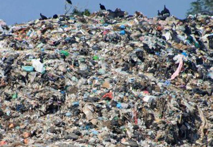 Urge la implementación de un programa de manejo de residuos sólidos y reciclado en el complejo. (Enrique Mena/SIPSE)
