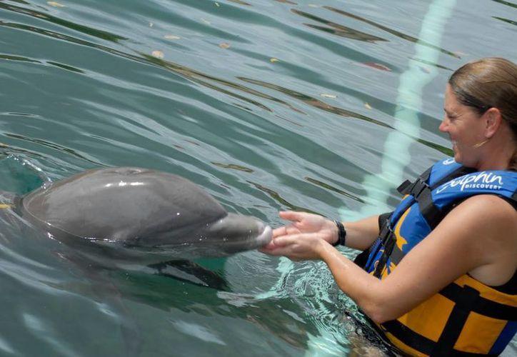 Los delfinarios generarían aproximadamente 80 fuentes de empleo de manera directa. (Jesús Tijerina/SIPSE)