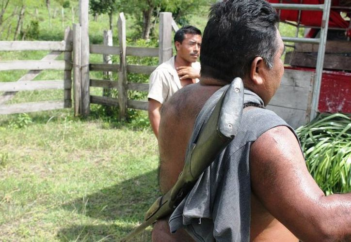 La cacería en áreas protegidas no alcanza fianza. (Edgardo Rodríguez/SIPSE)