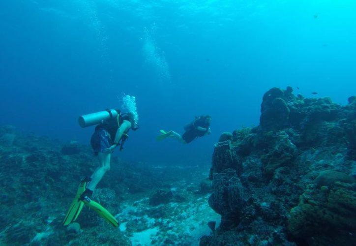 El buceo es una actividad turística que se puede practicar todo el año. (Israel Leal/SIPSE)