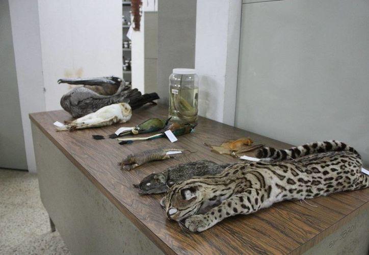 Referente nacional e internacional,  la colección zoológica cuenta con el 95 por ciento de especies representativas de la región sureste del país. (Milenio Novedades)