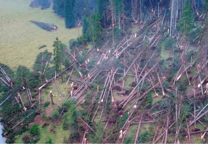La destrucción de la vegetación afecta a varias especies animales que habitan la zona. (Noticieros Televisa)