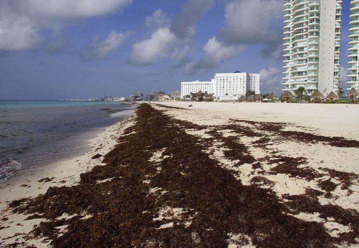 La solución de las redes en el mar, evitaría que el alga marina llegue a las playas de Quintana Roo. (Tomás Álvarez/SIPSE)
