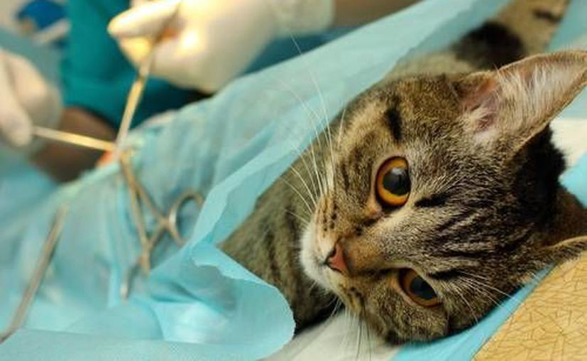 La esterilización se llevará a cabo el 1 de marzo. (Contexto/Internet)