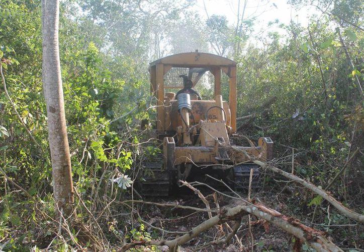 A partir de este año empiezan con la reforestación de áreas quemadas. (Harold Alcocer/SIPSE)