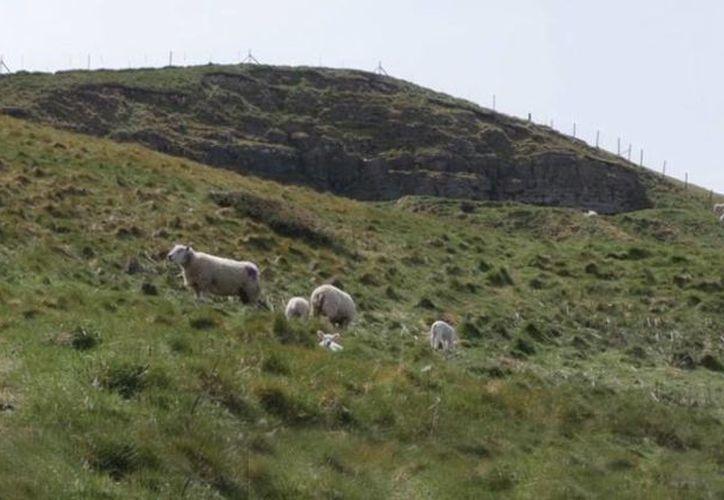 El afortunado deberá cuidar el lugar con toda su fauna, lo cual es nada menos que 500 ovejas. (independent.co.uk)