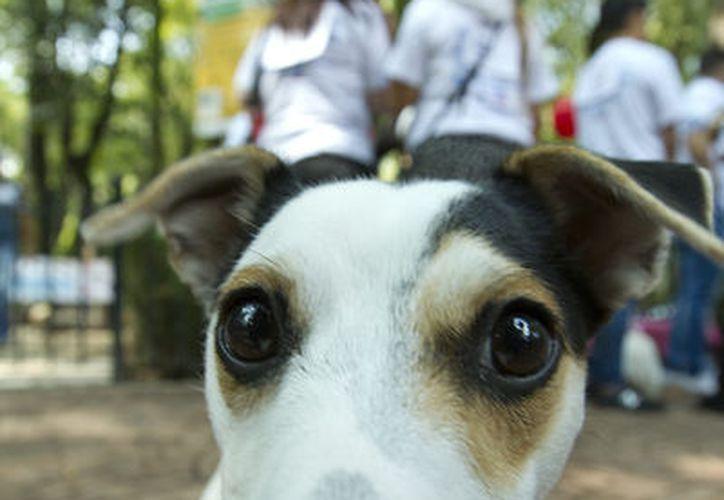 Dueños de perros y gatos podrán llevar a sus mascotas al Centro de Atención Canino y Felino, en Progreso, donde los  animales recibirán atención sin costo para los propietarios. La imagen es únicamente ilustrativa (NTX/Archivo)