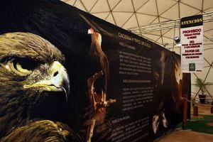 'Amos del viento' en la Feria Yucatán en X'matkuil 2012