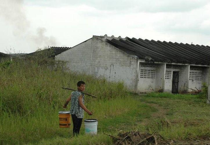La situación del mercado internacional ha provocado que en varias ocasiones se atrasen los pagos, poniendo en un difícil situación económica a los cortadores y sus familias. (Edgardo Rodríguez/SIPSE)