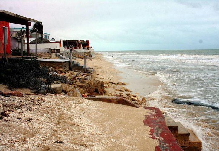Investigadores trabajarán en zona ubicada entre Yucalpetén y Chuburná Puerto. (Milenio Novedades)