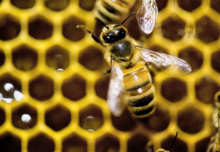 Imagen de una colmena de abjeas en un escaparate de Vermont Beekeeping Supply booth en la Feria Agrícola de Vermont, en Essex Junction, Vermont, EU. (Agencias)