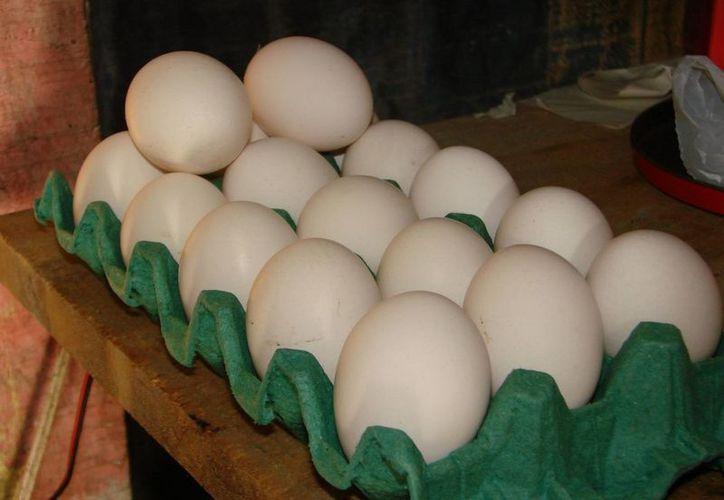 Actualmente, los diversos expendios de huevo de la cabecera municipal comercializan el producto a un costo de dos pesos por pieza. (Manuel Salazar/SIPSE)