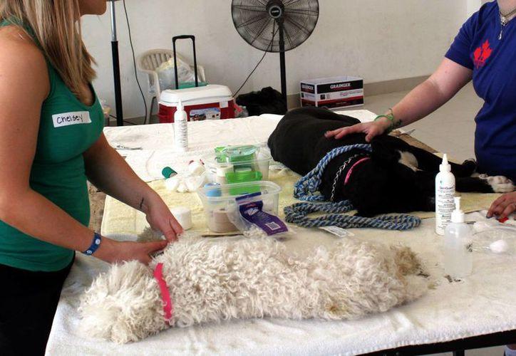 Los propietarios de mascotas deben solicitar el registro con el que opera el establecimiento. (Tomás Álvarez/SIPSE)