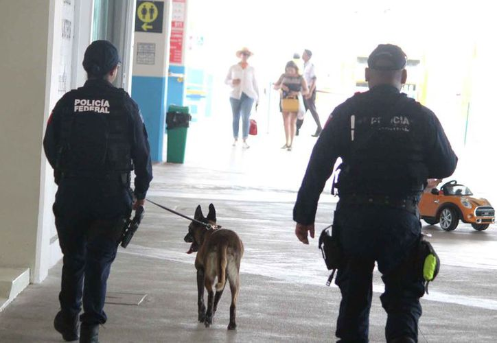 Agentes de la Policía Federal realiza revisiones con un binomio para seguridad de los turistas. (Foto: Daniel Pacheco/SIPSE)