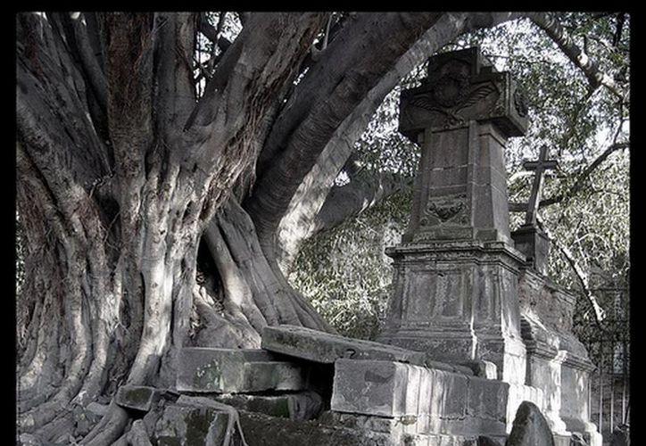 """Este es el """"árbol del vampiro"""" y su tumba, en el panteón de Belén."""