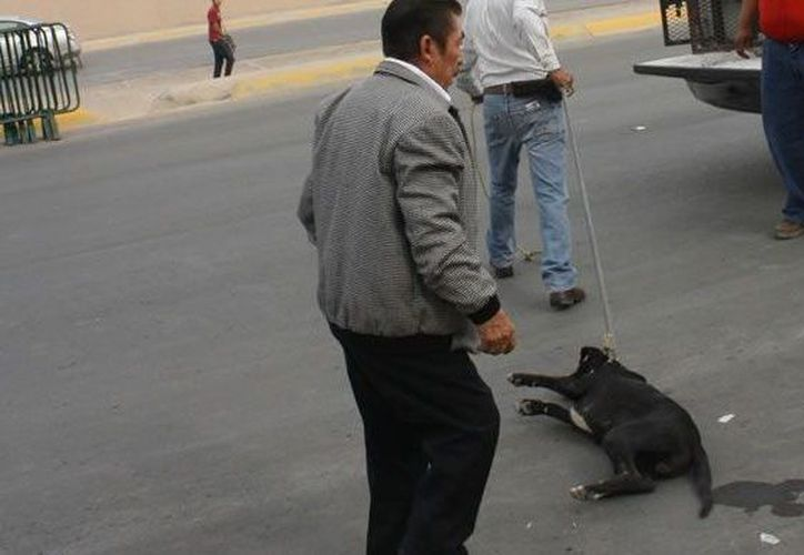 Así atraparon al perro los empleados de la perrera. (Diario de Coahuila)