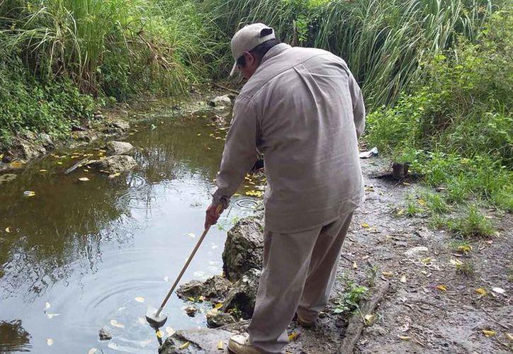 El mosquito Anopheles vive en ríos, las charcas y cuerpos de agua. (Redacción/SIPSE)