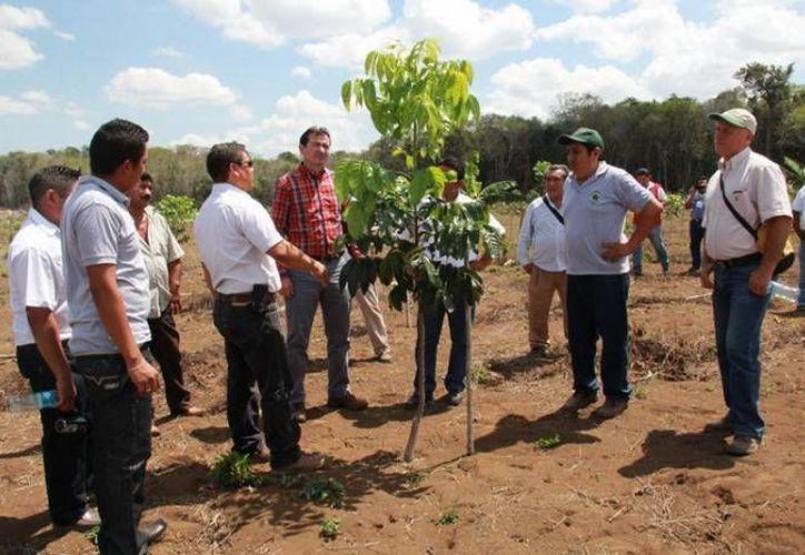 El objetivo del programa es propiciar el desarrollo forestal en las comunidades rurales, para recuperar los sistemas silvopastoriles y las áreas afectadas. (Contexto/Internet)