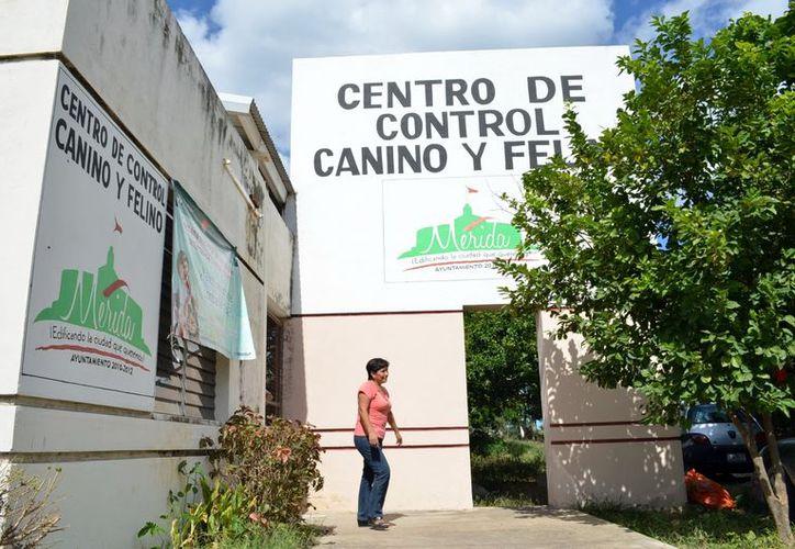 El Centro de Control Canino y Felino recibe 15 perros en promedio al día. (Theani Ruz / SIPSE)