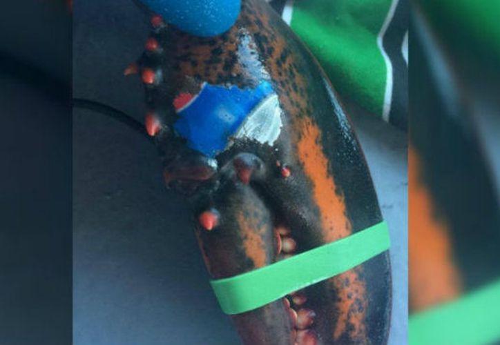 """El crustáceo tiene """"tatuado"""" una parte del logo de Pepsi, aún no se explican cómo fue que se imprimió en su cuerpo. (Foto: Captura de video)"""