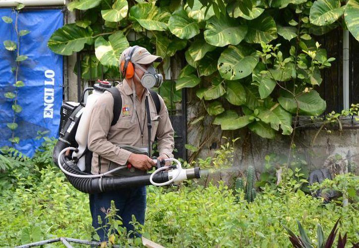 Tres mil casos aproximadamente se han registrado en Brasil y 392 defunciones. (Foto: Redacción / SIPSE)