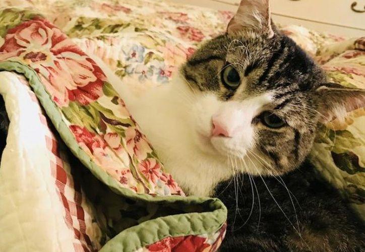 Lo único que Betsy espera ahora es que Stan no rechace el trasplante y dure por lo menos hasta que cumpla 30 años. (The Baltimore Sun)