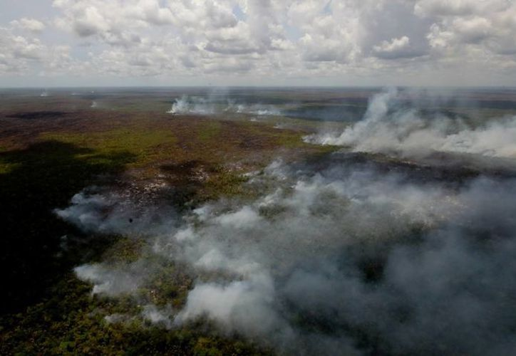 Los tres incendios se encuentran en Bacalar; se mantienen activos otros en Quintana Roo. (Javier Ortiz/SIPSE)