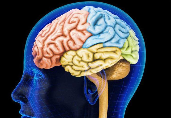 La pérdida de conexiones neuronales en el cerebro sería el origen del mal de Alzheimer, de acuerdo con estudios de investigadores de Estados Unidos. (elespectador.com)