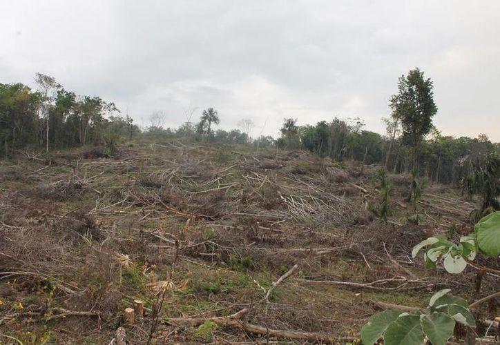 Planean retomar las actividades del Inventarios Forestales. (Edgardo Rodríguez/SIPSE)