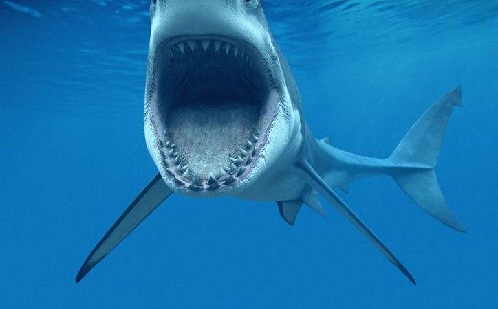 Aún no se ha identificado la especie del tiburón que atacó a la adolescente. (El País)