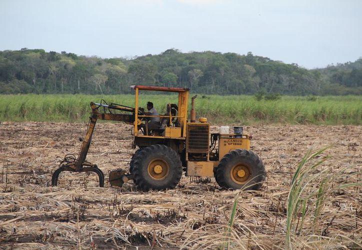 Productores de caña de Río Hondo piden que se genere un fondo para emergencias.  (Carlos Castillo/SIPSE)