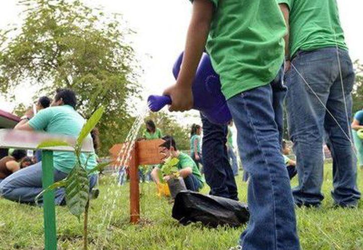 Tres escuelas de Quintana Roo obtuvieron la  Bandera Verde que las acredita como ecológicas. (Cortesía)