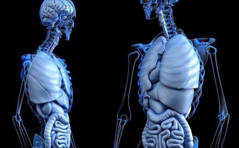 Ciencia | Modelo de humano 3D por uso de la tecnología | Mindy