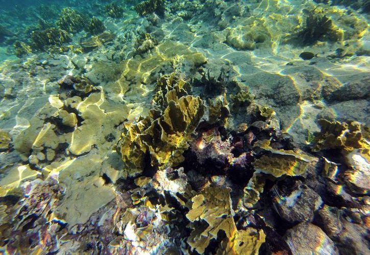 Autoridades ambientales realizan las inspecciones para determinar el daño al ecosistema marino. (Milenio Novedades)