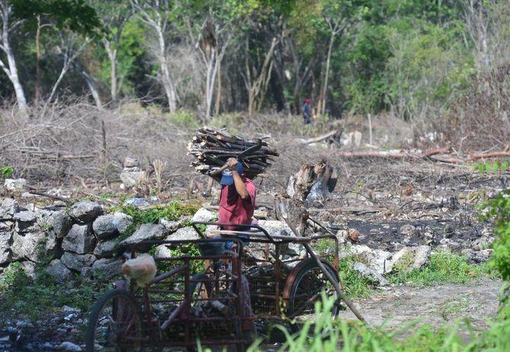 Una de las denuncias fue interpuesta por el daño ambiental causado en la zona ejidal. (Milenio Novedades)