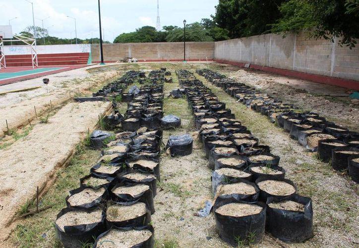 Se desconoce el destino de la infraestructura que conformaba el huerto. (Octavio Martínez/ SIPSE)
