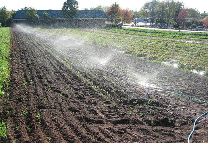 Las granjas con pesticidas pueden ser menos dañinas que las orgánicas. (organicsa.net)