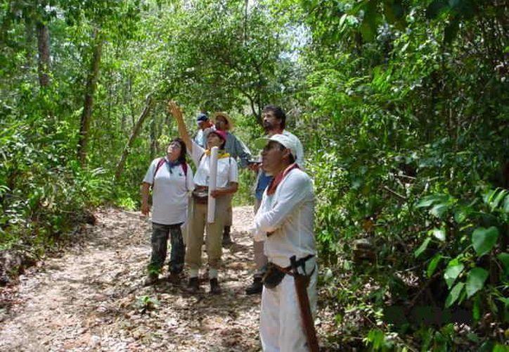 Los proyectos de desarrollo sustentable serán poyados por al Conafor. (Archivo/SIPSE)