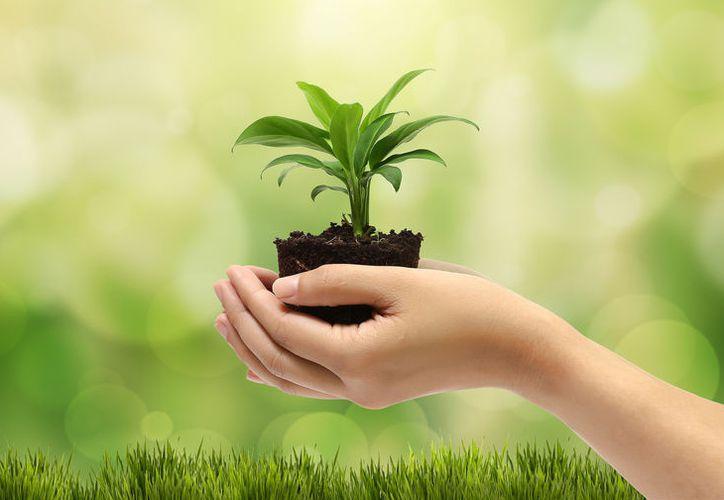 El propósito del festival es que la ciudadanía se interese más en el cuidado del ambiente. (Foto: Contexto/Internet)