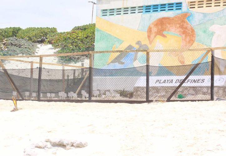 La Dirección de Ecología instaló dos corrales grandes para proteger los huevos de las tortugas. (Luis Soto/SIPSE)