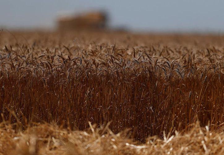 Las temperaturas no solo se harán más frecuentes fenómenos meteorológicos extremos como sequías e inundaciones. (Reuters)