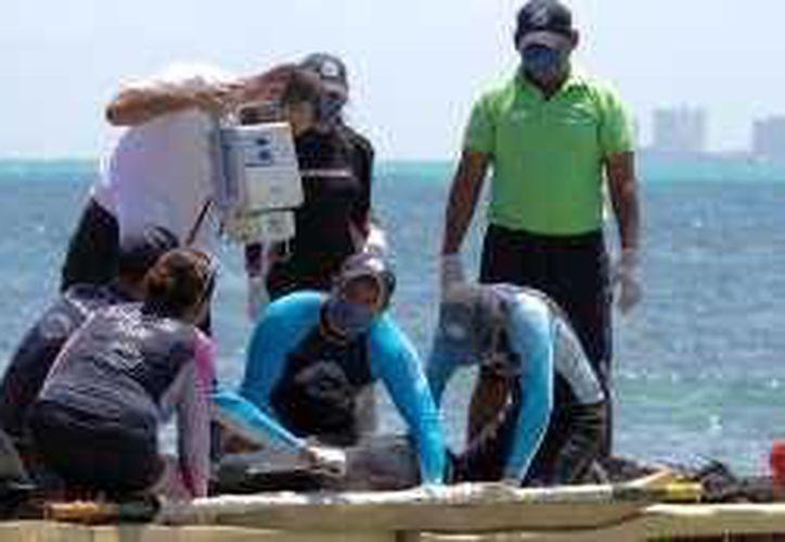 Especialistas de la Red de Varamiento de Mamíferos Marinos, practicaron un nuevo ultrasonido al delfín hembra. (Notimex)